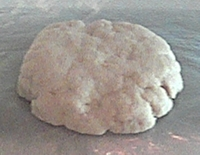 Dough for savory cookies or cream crackers